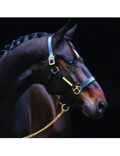 Licol cuir doublé Amigo Horseware